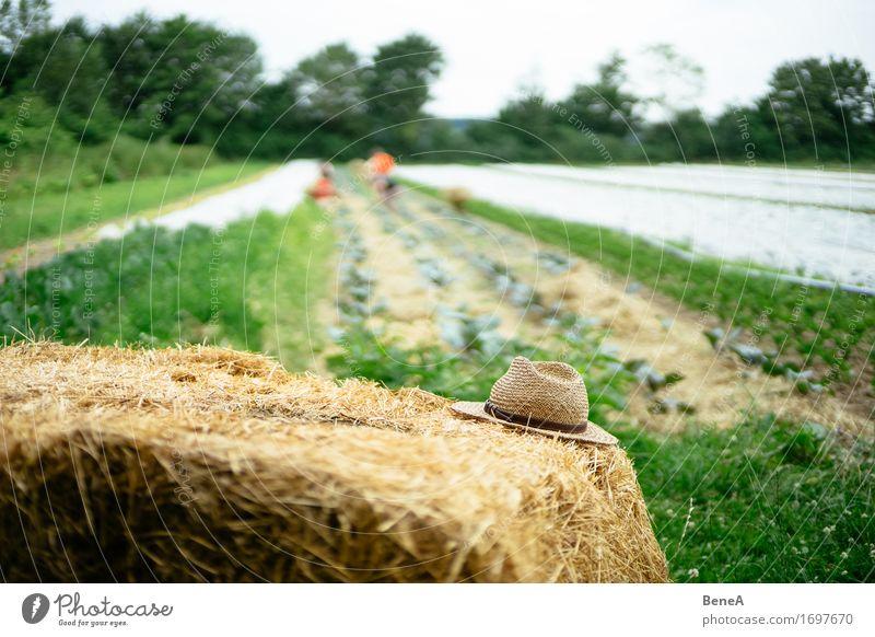 Alter Hut Natur Pflanze Umwelt Wiese Stil Arbeit & Erwerbstätigkeit Feld Vergangenheit Landwirtschaft Beruf Bauernhof Tradition Gartenarbeit Forstwirtschaft