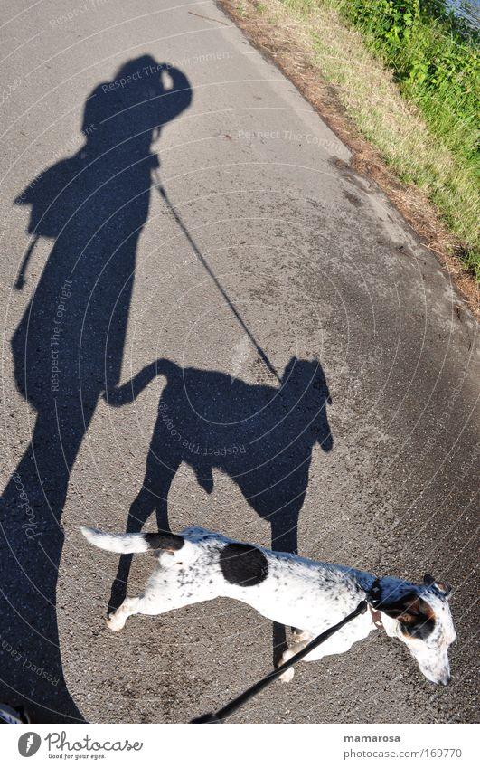 Comeback Flecki Tier Straße Wege & Pfade Hund klein lustig Zusammensein wild verrückt Sicherheit einzigartig außergewöhnlich niedlich festhalten beobachten