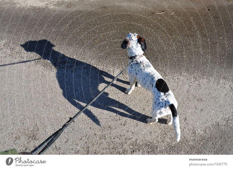 kleiner Mann ganz groß Tier Straße Hund Wege & Pfade Kraft Angst Sicherheit Macht stehen beobachten wild Fell festhalten stark niedlich Stress