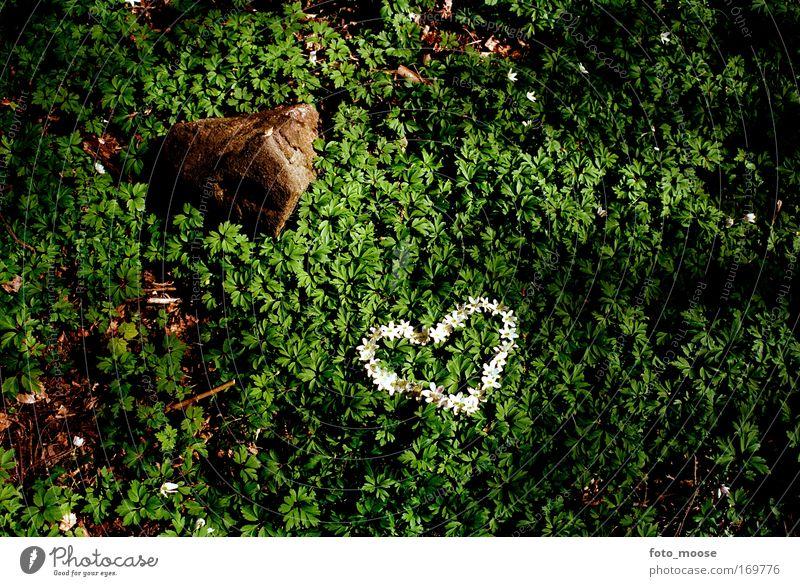 Natur grün schön Freude Liebe Gefühle Stein Traurigkeit träumen Freundschaft Herz natürlich Fröhlichkeit Lifestyle Romantik Liebeskummer