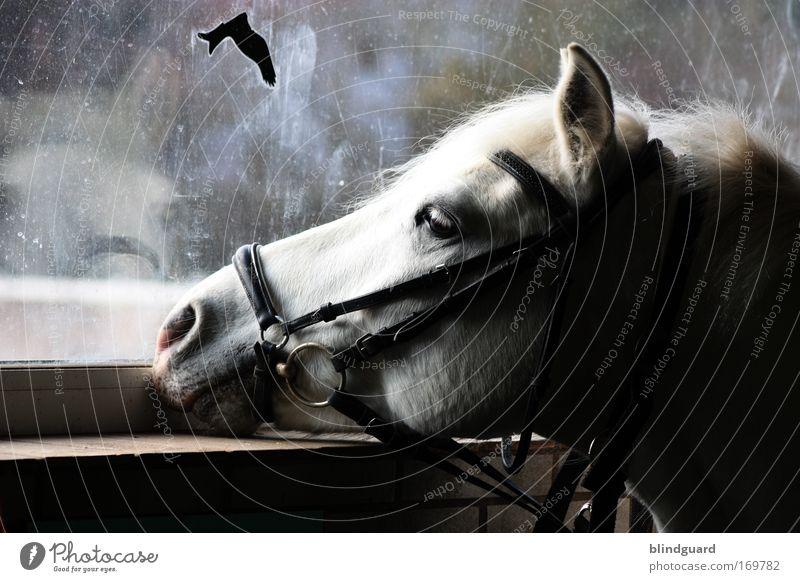 Nice Day For A Ride ... ruhig Einsamkeit Tier Auge träumen Traurigkeit Vogel dreckig Pferd Hoffnung Ohr Sehnsucht Neugier Langeweile Schreibwaren langhaarig