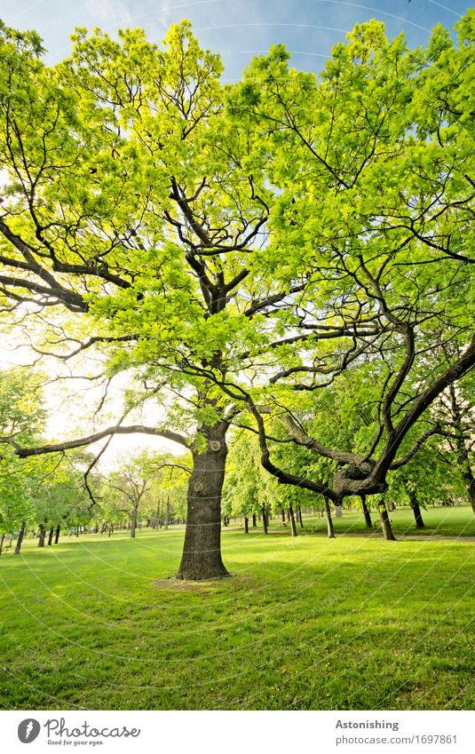 Der Baum Umwelt Natur Landschaft Pflanze Luft Himmel Sonne Sonnenlicht Sommer Wetter Schönes Wetter Wärme Blatt Park Wien groß hell schön gelb grün schwarz