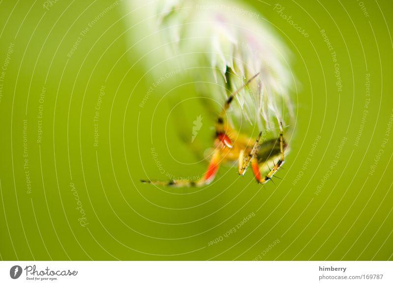 webmaster 2009 Natur Pflanze Tier Gefühle Umwelt Informationstechnologie Park Angst Netzwerk bedrohlich Wildtier Neugier fantastisch Todesangst Computernetzwerk