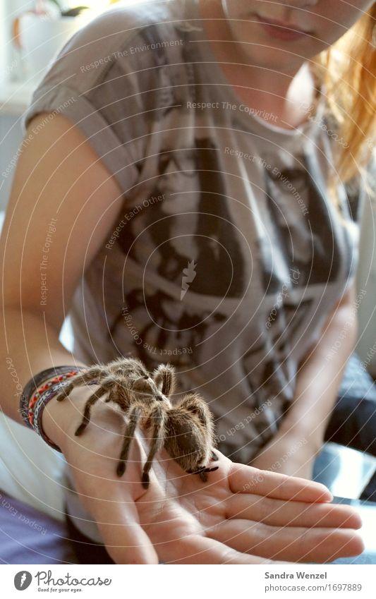 Spider 2 Natur Jugendliche Hand Tier feminin Freizeit & Hobby Angst Finger Abenteuer Asien Insekt Fell Wissenschaften Afrika Jagd Urwald