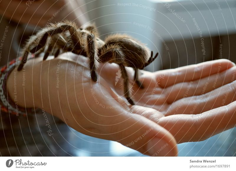 Spider 3 Natur Hand Tier Umwelt Zufriedenheit Angst Insekt krabbeln Spinne