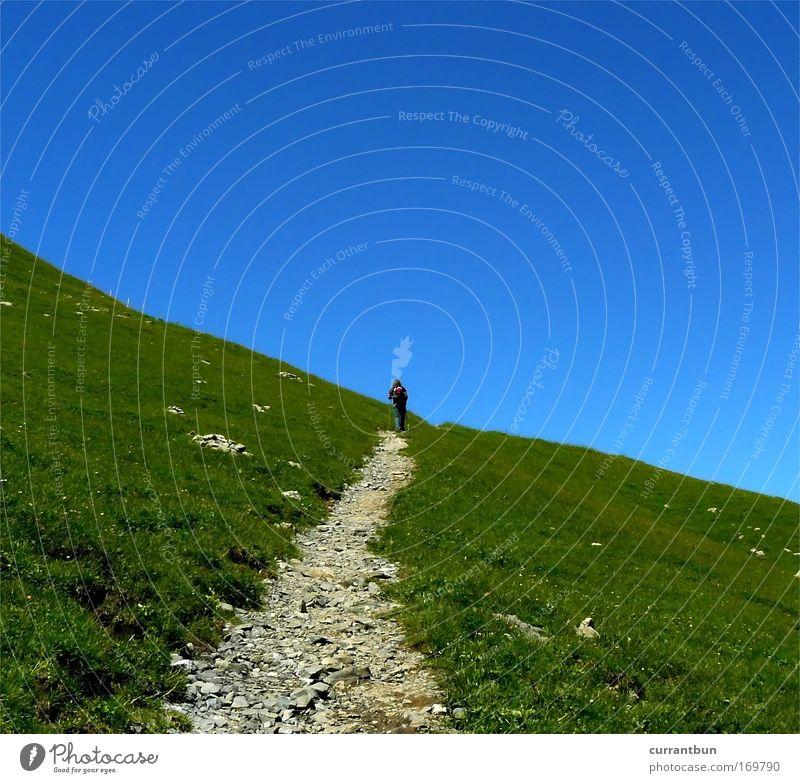 dieser weg... grün blau Tier Berge u. Gebirge Wärme wandern Alpen Hügel Schönes Wetter Schweiz Vollbart Streichelzoo Engelberg