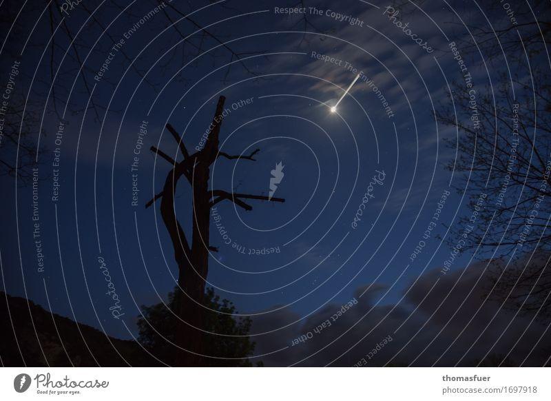Baumstumpf, Nacht, Meteorit Himmel Wolken Nachthimmel Stern Schönes Wetter Unwetter bedrohlich gruselig blau schwarz Überraschung Einsamkeit Angst Rache Ende