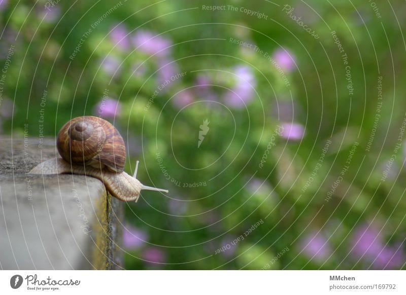 links ist frei Natur Ferien & Urlaub & Reisen Sommer Tier Umwelt Freiheit Bewegung Stein träumen Park Wohnung Geschwindigkeit Gelassenheit Schnecke Optimismus