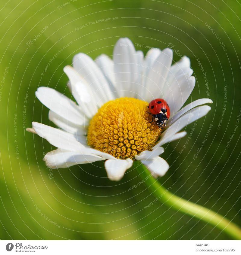 la coccinelle Natur Blume Pflanze Sommer Tier Gefühle Blüte Frühling Glück Zufriedenheit Design Erfolg Hoffnung Fröhlichkeit ästhetisch Lebensfreude