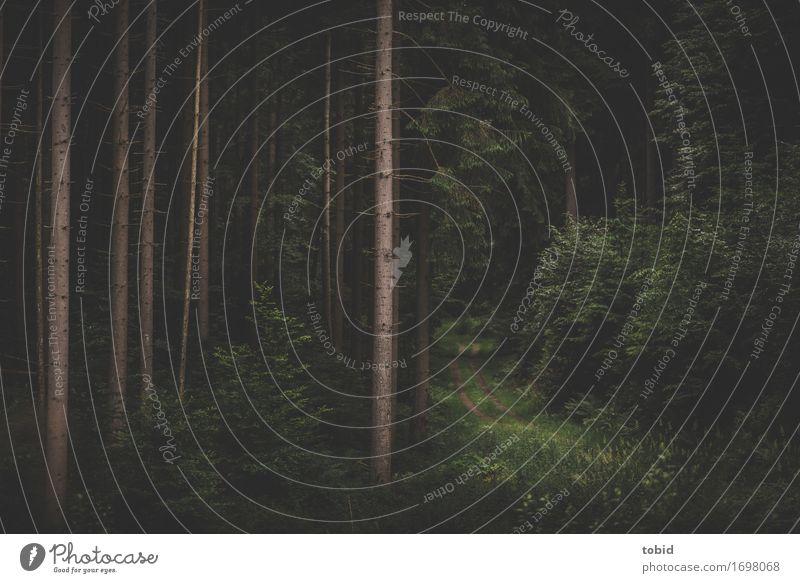 Versteckter Pfad Natur Landschaft Pflanze Baum Gras Sträucher Moos Wald dunkel Einsamkeit Idylle Waldlichtung Baumstamm Blatt ruhig Verhext Wege & Pfade