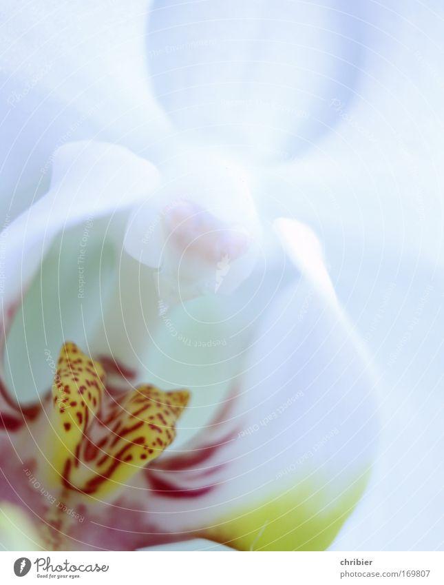 """Sag mal """"AAAAHHHH""""! Nahaufnahme Makroaufnahme Pflanze Blume Orchidee Blüte exotisch Blühend Duft genießen ästhetisch schön Sauberkeit gelb rot silber weiß Glück"""