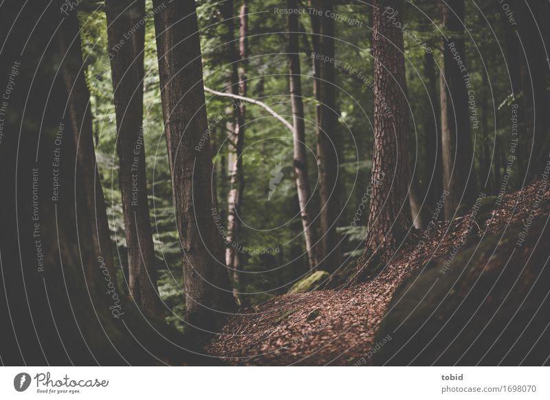 Wege Natur Landschaft Pflanze Baum Gras Sträucher Moos Wald Hügel Felsen Einsamkeit einzigartig Idylle Waldlichtung Wege & Pfade Völker Blatt Farbfoto