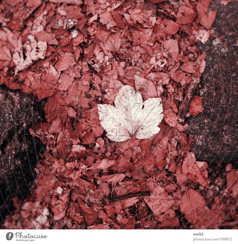 Demut Natur Pflanze rot Blatt Umwelt Traurigkeit Herbst Gefühle Tod Stein rosa liegen Erde trist warten Vergänglichkeit