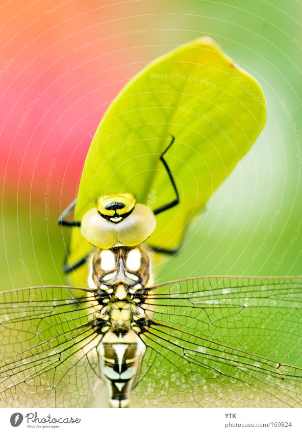 Up and away Natur schön grün Pflanze rot Blatt Tier Gras Wärme elegant ästhetisch Flügel Makroaufnahme beobachten wild fantastisch