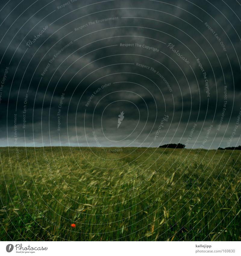 eine rote blume macht noch keinen sommer Natur Himmel Pflanze Sommer Wolken Tier Gras Bewegung Frühling Landschaft Luft Feld Angst Wind Wetter Umwelt