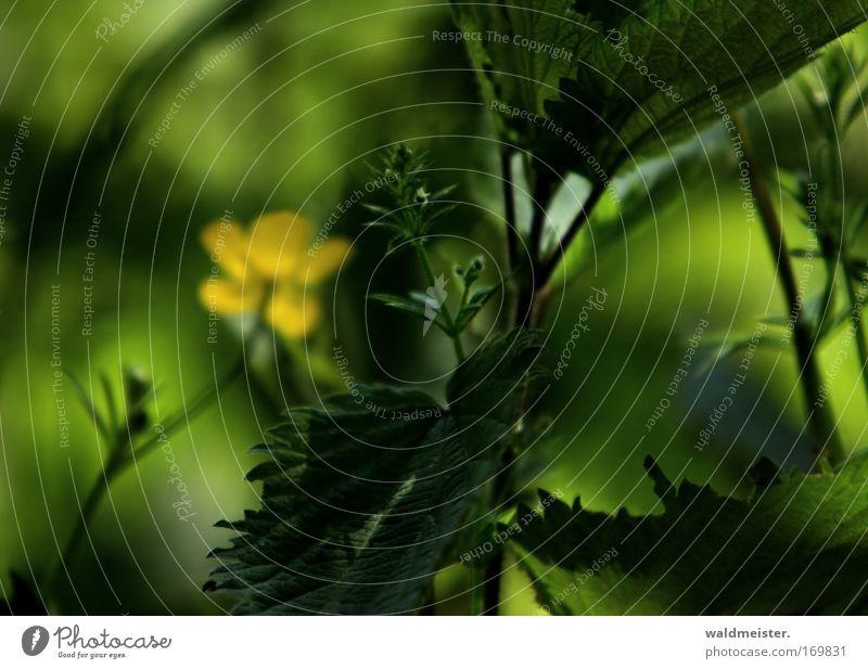 Traum in Grün Farbfoto Außenaufnahme Nahaufnahme abstrakt Menschenleer Textfreiraum links Textfreiraum oben Tag Schatten Kontrast Schwache Tiefenschärfe Pflanze