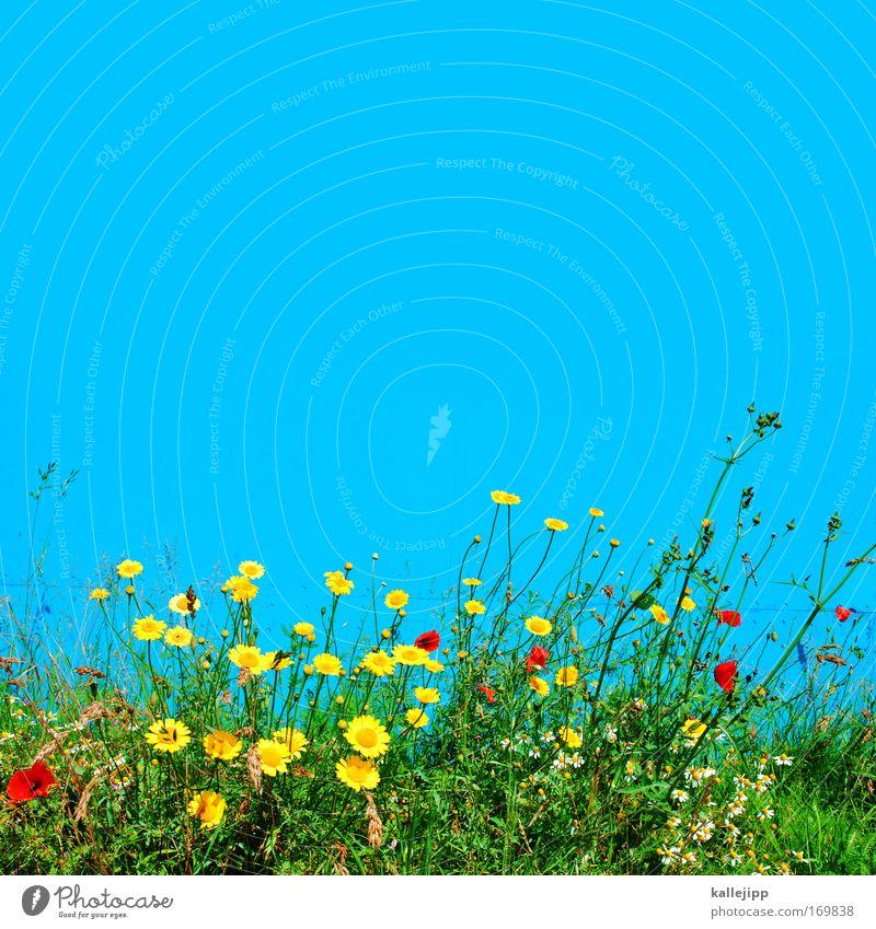 eine blaue wand macht noch keinen sommer Natur schön Himmel Blume Pflanze Freude Tier Wiese Blüte Gras Glück Park Landschaft Luft Zufriedenheit Umwelt