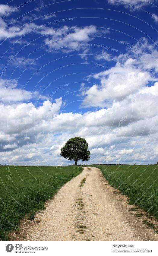 einsamer Baum Farbfoto Außenaufnahme Menschenleer Tag Sonnenlicht Starke Tiefenschärfe Zentralperspektive Ausflug Freiheit Sommer Sommerurlaub Landschaft Tier