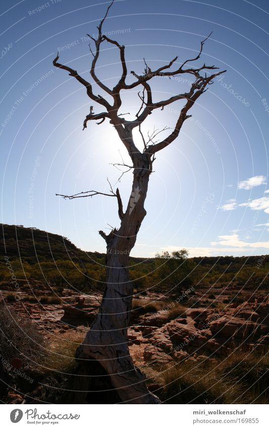 Trockenheit Baum Sonne ruhig Einsamkeit Wärme Wüste Fernweh