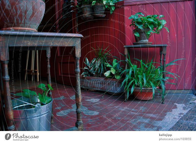 oase Farbfoto mehrfarbig Außenaufnahme Detailaufnahme Menschenleer Tag ruhig Freizeit & Hobby Ferien & Urlaub & Reisen Tourismus Häusliches Leben Wohnung Haus