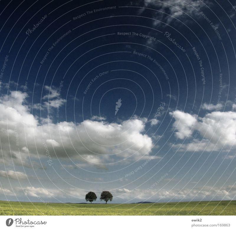 Treue Himmel Natur blau grün Baum Landschaft Wolken Ferne Umwelt Gefühle Frühling Gras Freiheit Deutschland Horizont Feld