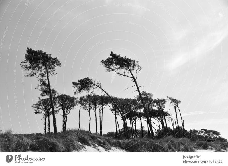Weststrand Natur Pflanze Baum Landschaft Umwelt natürlich Küste wild Zufriedenheit Wachstum Idylle Wind Klima einzigartig Vergänglichkeit Wandel & Veränderung
