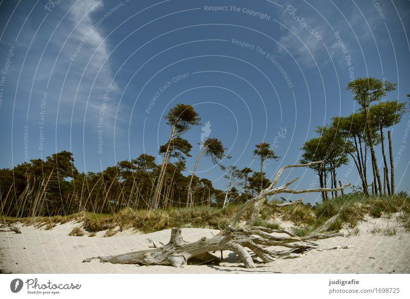 Weststrand Himmel Natur Ferien & Urlaub & Reisen Pflanze Baum Landschaft Strand Wald kalt Umwelt natürlich Küste außergewöhnlich Stimmung wild Idylle