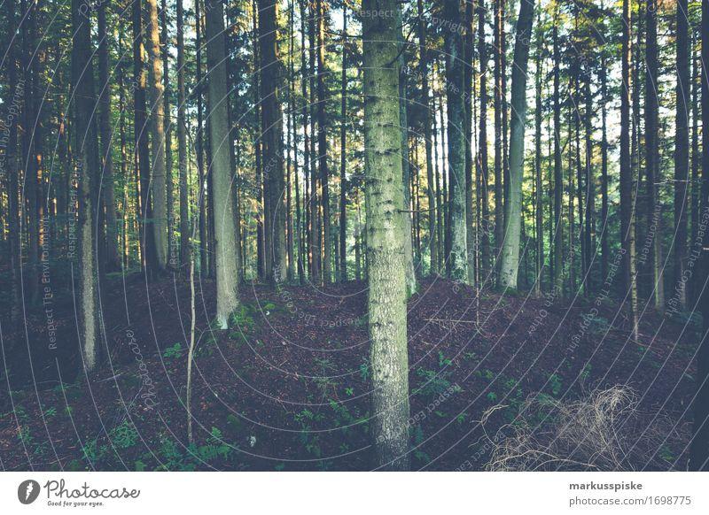 wald bäume Sinnesorgane Erholung ruhig Freizeit & Hobby Ferien & Urlaub & Reisen Tourismus Ausflug Abenteuer wandern Schönes Wetter Pflanze Baum Sträucher Moos