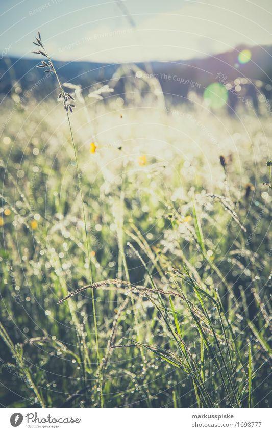 im frühtau morgentau Natur Ferien & Urlaub & Reisen Pflanze Sommer Landschaft Erholung ruhig Tier Ferne Berge u. Gebirge Umwelt Wiese Garten Freiheit Tourismus