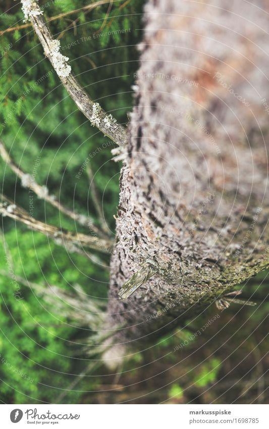 baumwipfel ruhig Meditation Ferien & Urlaub & Reisen Tourismus Ausflug Abenteuer Sommer wandern Umwelt Natur Landschaft Pflanze Tier Klima Baum Sträucher Moos