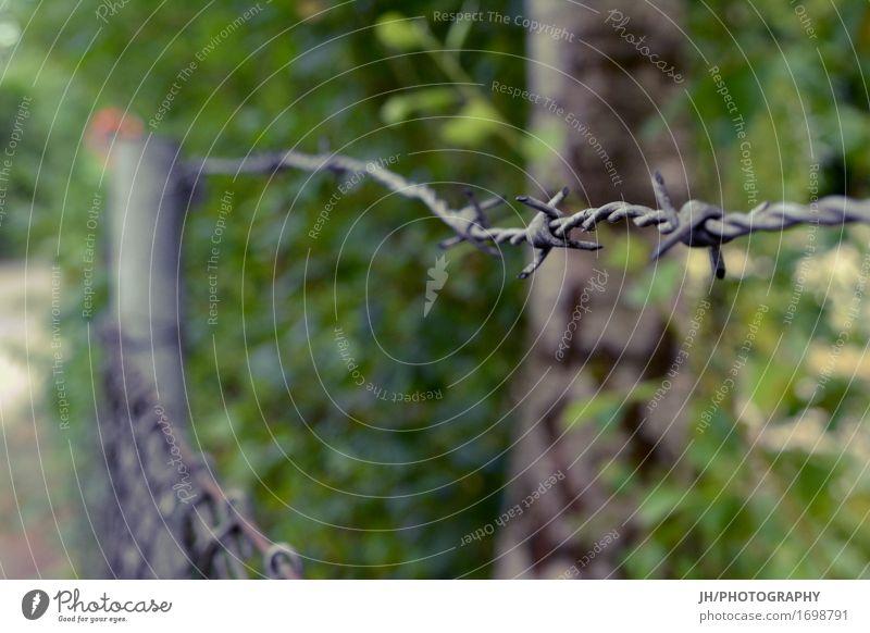 no trespassing Natur Blatt Mauer Wand Zaun Metall bedrohlich rebellisch Spitze stachelig grau grün Laster Kraft Verschwiegenheit Hemmung verstört