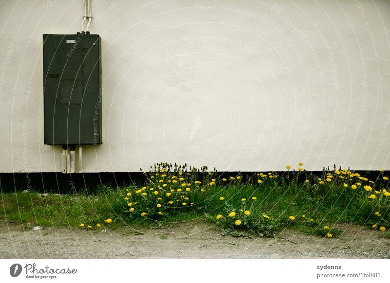 Freiraum Natur Blume Pflanze ruhig Einsamkeit Ferne Leben Wand Gefühle Gras Freiheit träumen Traurigkeit Mauer Umwelt Zeit
