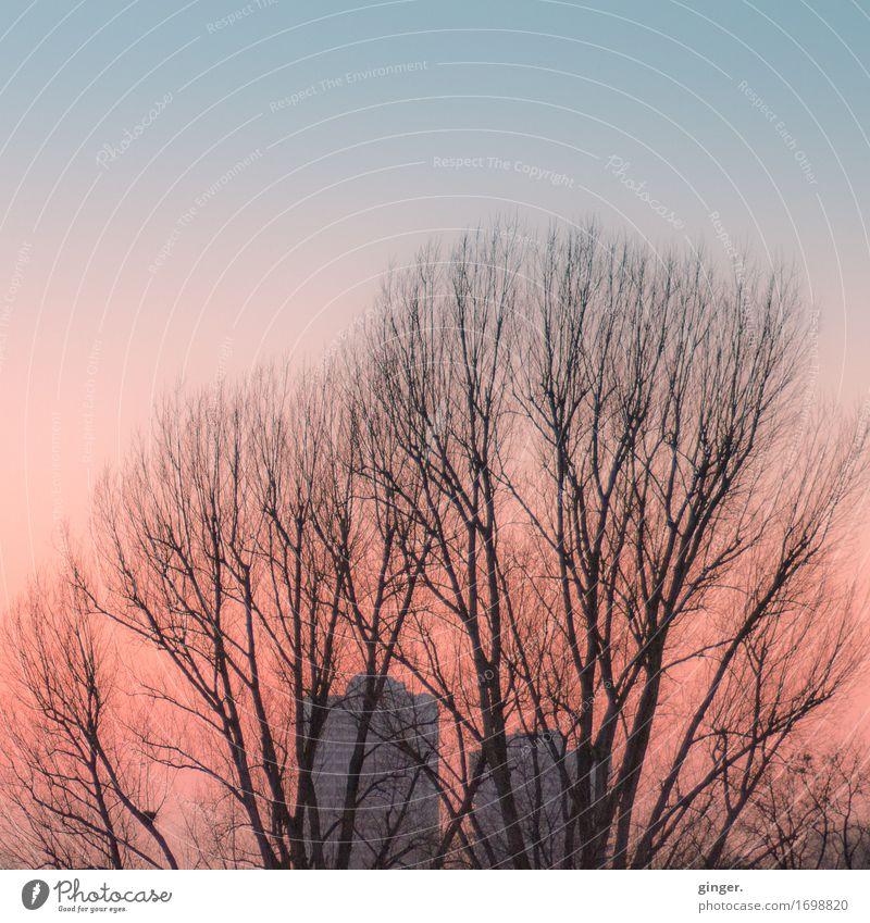 Abendrot Himmel Stadt blau Baum ruhig Umwelt Herbst rosa Park Hochhaus Ast Schönes Wetter weich Wolkenloser Himmel Etage Abenddämmerung