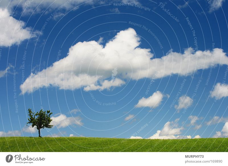 Wolkenhimmel über saftig grüner Wiese... Natur Himmel weiß Baum blau Pflanze Gefühle Gras Frühling Landschaft hell Wetter Umwelt