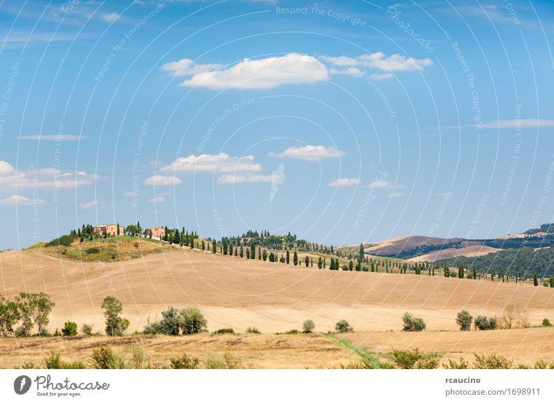 Landhäuser auf einem Hügel. Toskanische Landschaft Erholung Ferien & Urlaub & Reisen Tourismus Sommer Haus Natur Himmel Wärme Baum Wiese Dorf braun gelb grün