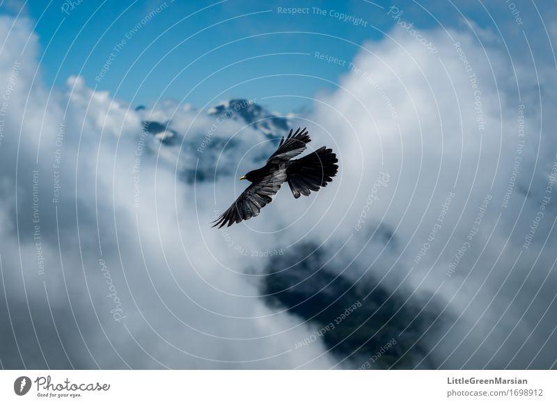 Wolkensurfer Himmel Natur blau Sommer weiß Tier schwarz Berge u. Gebirge Bewegung Freiheit fliegen Vogel hell Horizont Luft