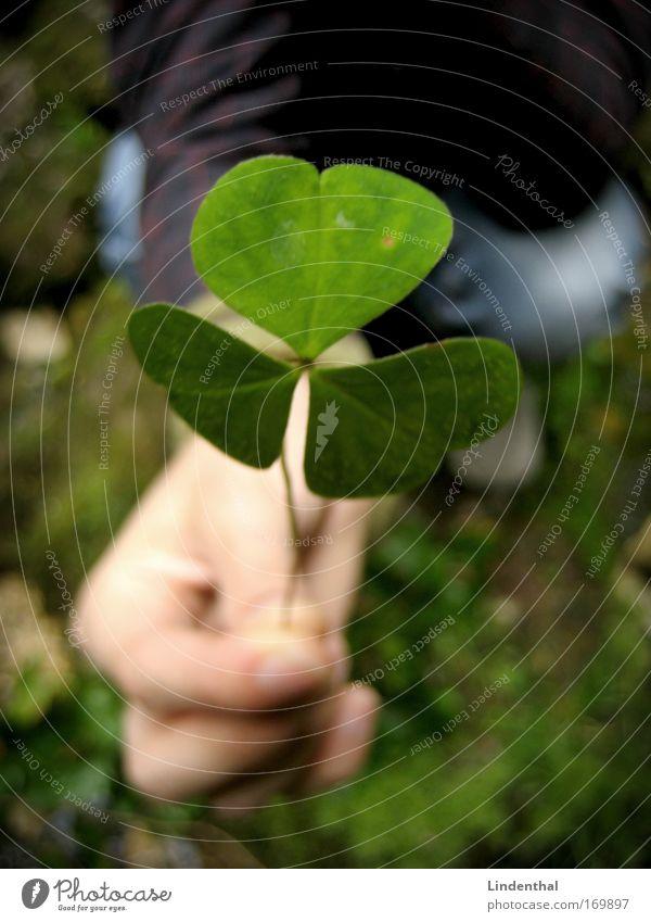 Ein Kleeblatt für Dich Mensch Hand Pflanze Blatt Liebe Gefühle Geschenk 1 Grünpflanze schenken Klee Kleeblatt