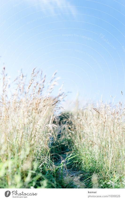 Weg im Grünen Natur Pflanze Sommer schön ruhig Wärme Umwelt Leben Wege & Pfade Wiese Gras Freiheit hell wild Freizeit & Hobby Feld
