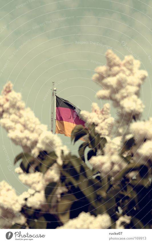 Vom Winde zerzaust Farbfoto Außenaufnahme Menschenleer Textfreiraum oben Tag Schwache Tiefenschärfe Zentralperspektive Garten Sträucher Fahne gelb rot schwarz