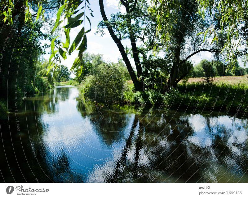 Kanu mieten Umwelt Natur Landschaft Pflanze Wasser Himmel Sommer Klima Schönes Wetter Baum Sträucher Blatt Wald Fluss Holz ruhig Idylle Spreewald Deutschland