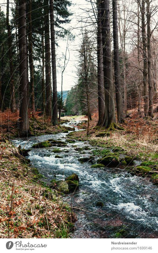 Wasserrechte Natur Pflanze Baum Landschaft ruhig Wald Leben Herbst frisch wandern Trinkwasser Fluss Klarheit rein nachhaltig