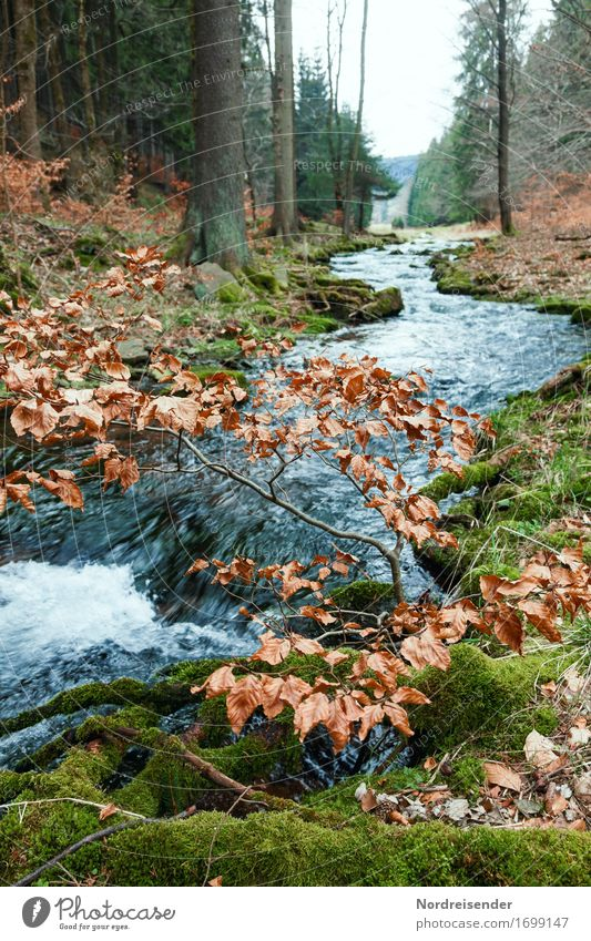 Thüringer Wald Natur Wasser Baum Landschaft ruhig Wald Frühling Herbst natürlich Regen wandern Ausflug Trinkwasser Urelemente Fluss rein