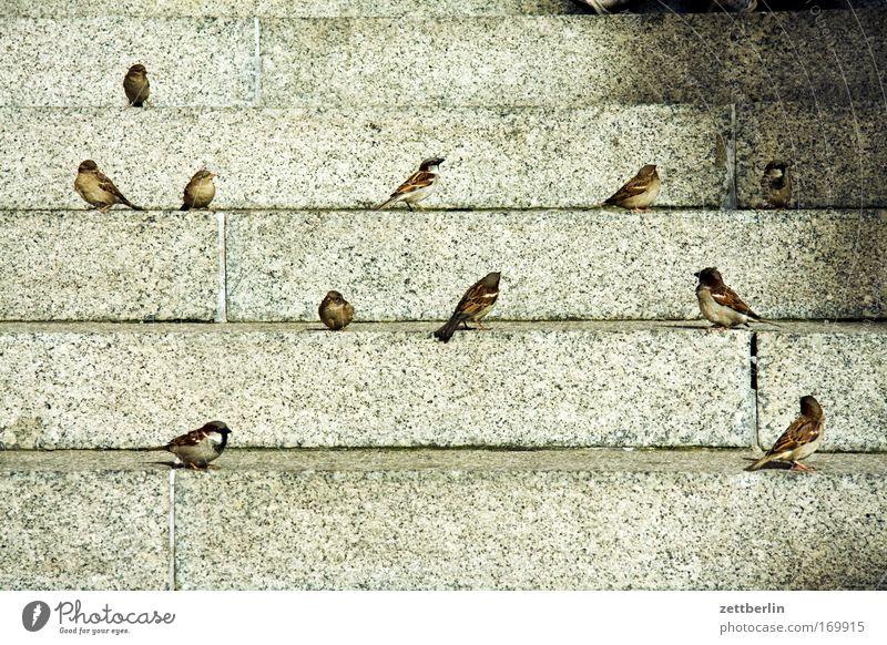 Spatzen Frühling Vogel Treppe sitzen warten Niveau Vogelschwarm Freitreppe Nahrungssuche