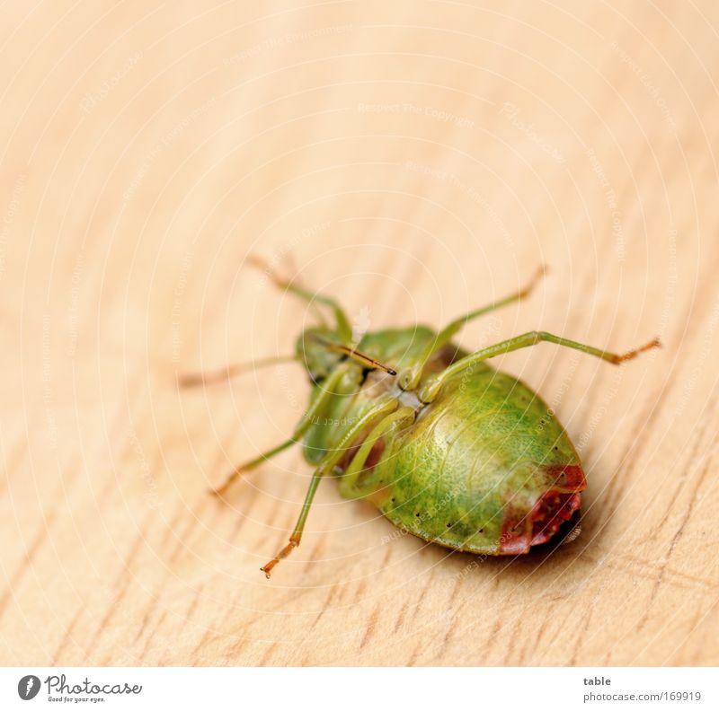helpless Natur schön grün rot schwarz Tier Erholung Bewegung braun klein groß frei Hoffnung ästhetisch bedrohlich liegen