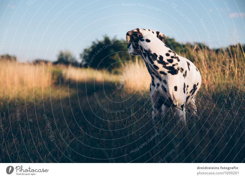 Was ist da? Natur Sonnenlicht Tier Haustier Hund 1 Blick stehen warten Freundlichkeit natürlich retro Vertrauen Neugier Überraschung Nervosität bedrohlich