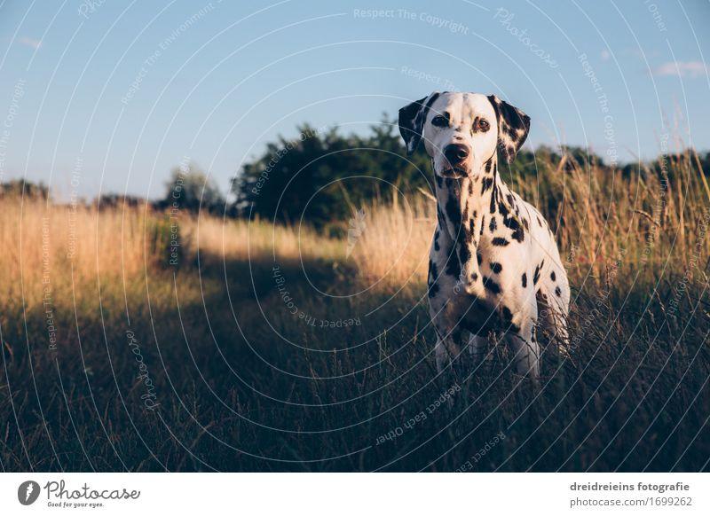 Sommertag in der Natur Umwelt Landschaft Sonnenlicht Schönes Wetter Tier Haustier Hund 1 Blick stehen warten ästhetisch Freundlichkeit Neugier niedlich