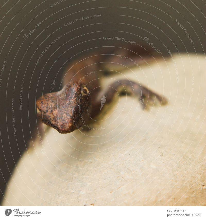 Fälschung schwarz Tier braun Wildtier Jagd Schuppen Echsen Echte Eidechsen Salamander