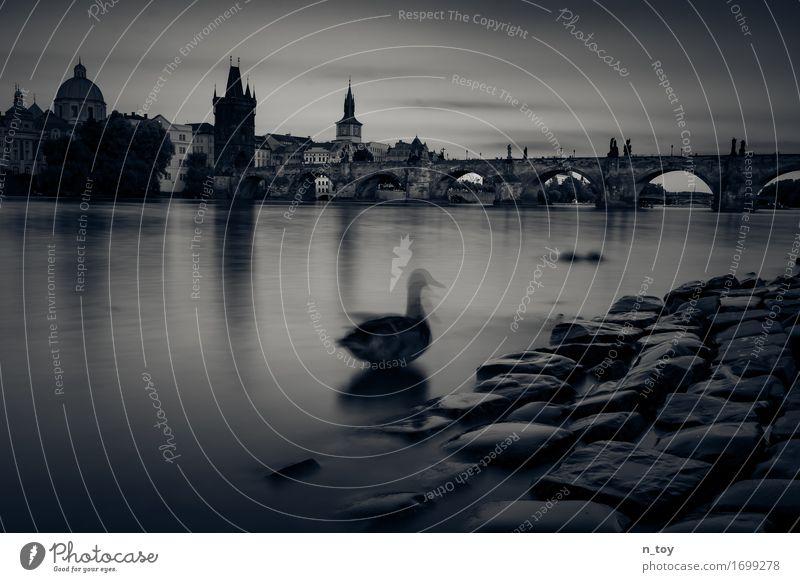 praha - mesto snu Wasser Tier ruhig dunkel Gefühle Bewegung Denken Stimmung Zufriedenheit Europa Abenteuer Brücke Fluss Altstadt Ente Prag