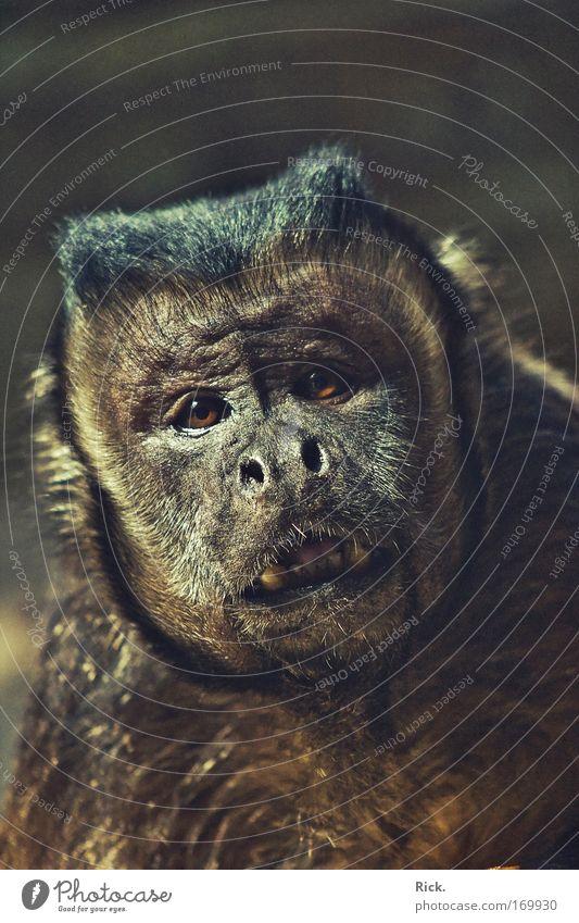 .Verzweiflung Textfreiraum oben Textfreiraum unten Schwache Tiefenschärfe Zentralperspektive Tierporträt Blick Blick in die Kamera Blick nach vorn