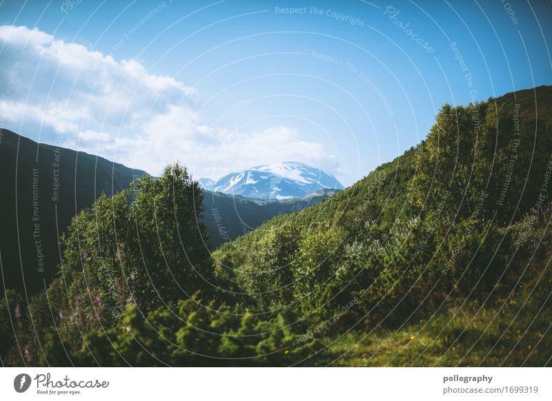 landscape Ausflug Abenteuer Ferne Freiheit Sightseeing Berge u. Gebirge Natur Landschaft Tier Himmel Wolken Wetter Schönes Wetter Wald Alpen Gipfel